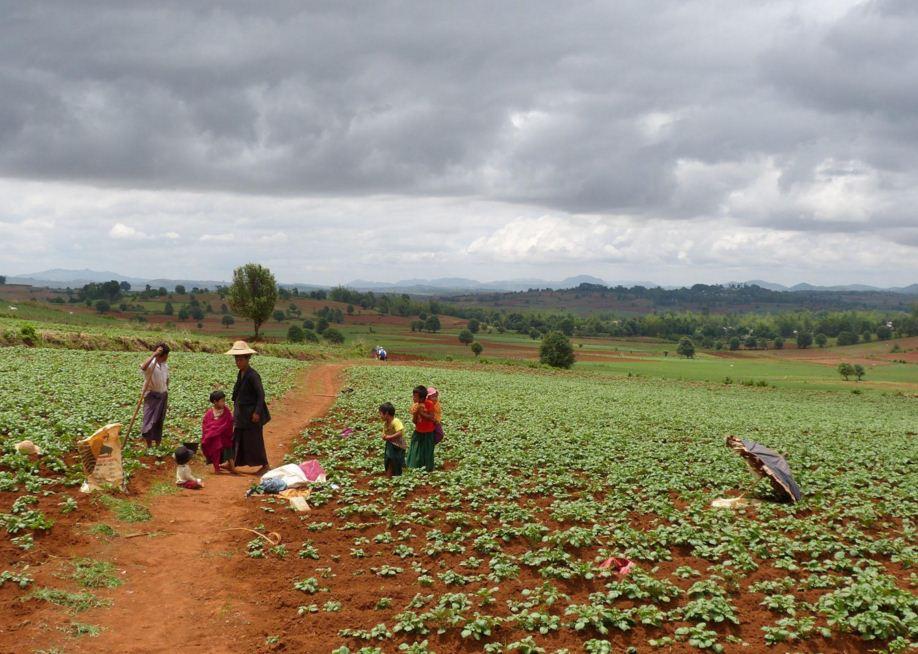pindaya-farm.JPG